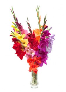 Mix Gladiolus Bouquet