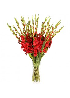 Red Gladiolus Bouquet